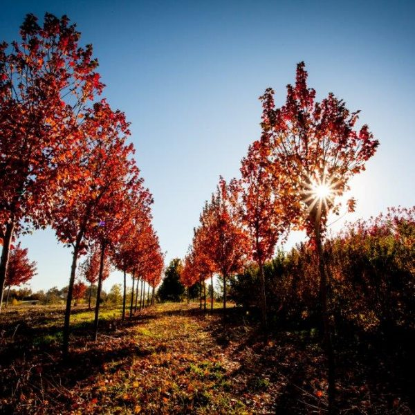 Salt Creek Tree Farms - Superior Garden Center - Rost, Inc.