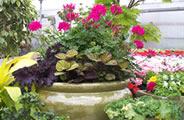 Custom plant container by Superior Garden Center - Rost Landscaping