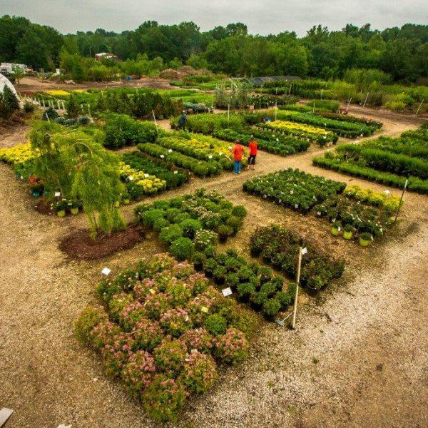 Superior Garden Center Distribution Lot