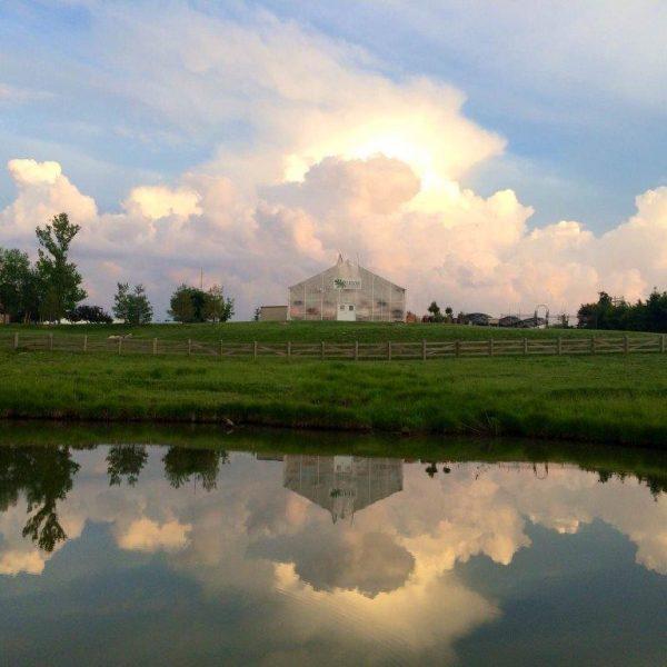 Superior Garden Center lake with green grass.