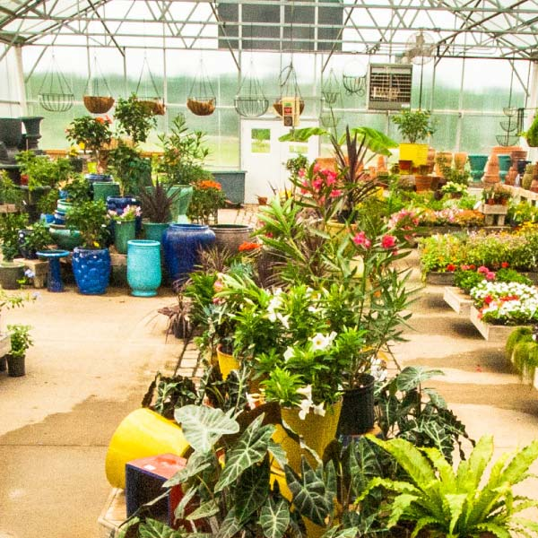 Ordinaire Superior Garden Center