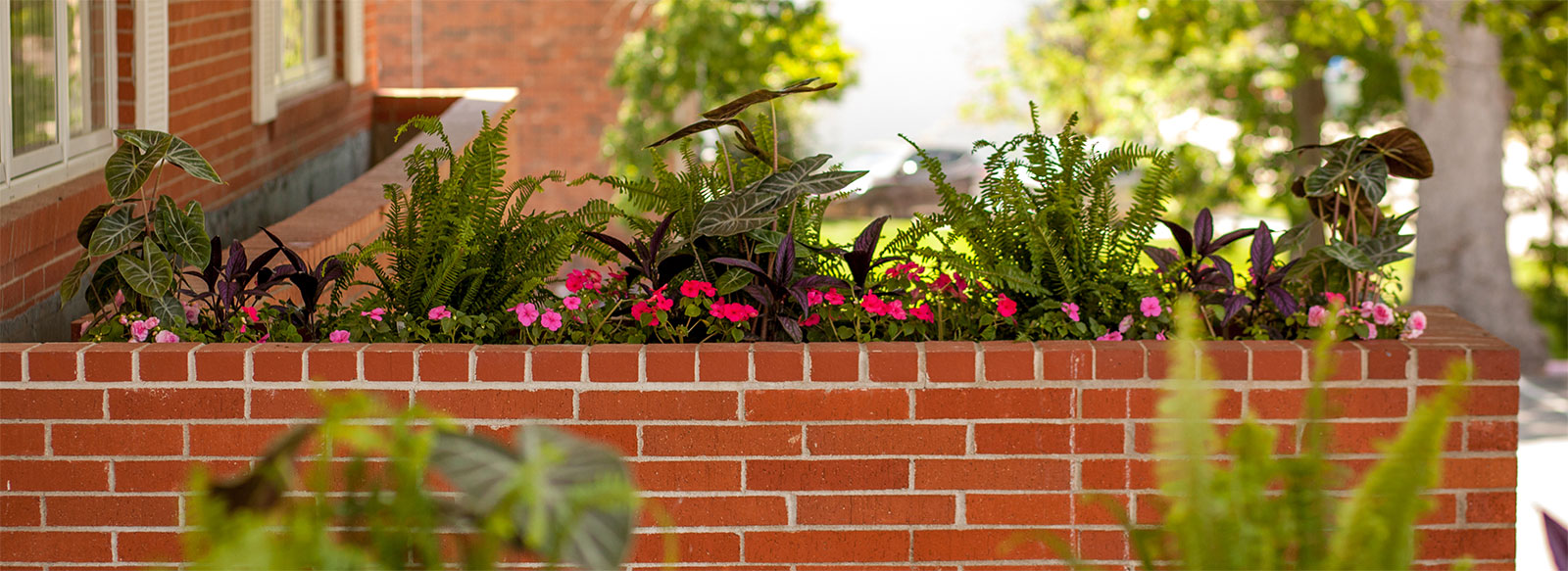 Lawn Maintenance Services   Rost Landscaping