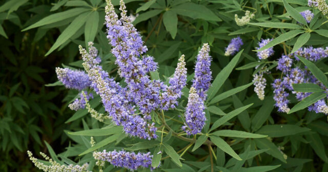 5 Underappreciated and Overlooked Plants